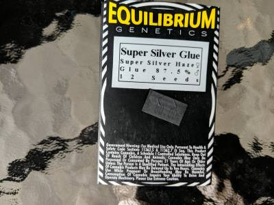 Equilibrium genetics super silver haze 12 seeds