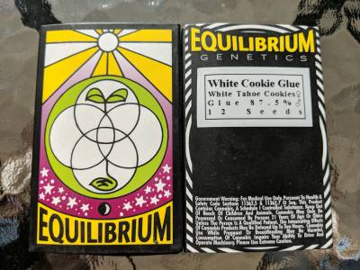 Equilibrium genetics white cookie glue 12 seeds