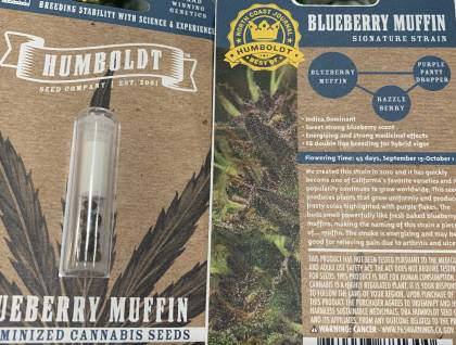 Humboldt Seed Co blueberry muffin feminized seeds