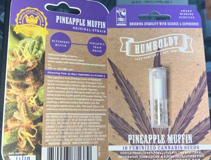 Humboldt Seed Co Pineapple Muffin feminized seeds